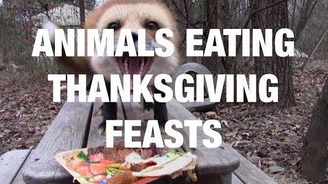 animals eating thanksgiving feasts.jpg