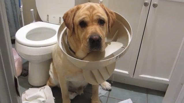 guilty dogs.jpg